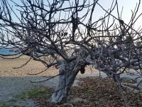 arbre en bord de plage